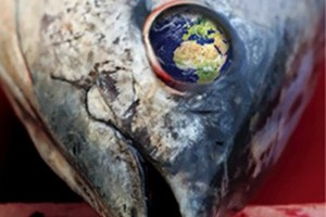Foodservice Footprint Tuna-head-294x300-300x200 Foodservice news, analysis, events and awards